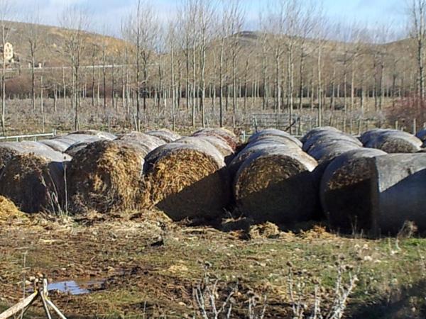 El seguro agrario crece durante el primer trimestre de 2014