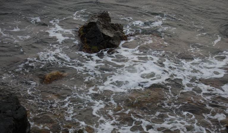 Cartografía de las praderas de fanerógamas marinas y el censo de Pinna nobilis