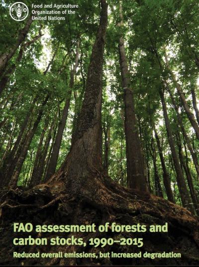 Los bosques son fundamentales para el equilibrio de carbono y albergan casi tres cuartas partes del total de carbono que hay en la atmósfera.