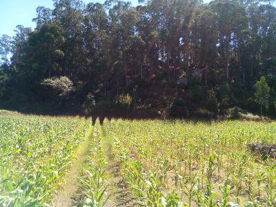 Samples es un programa de investigación que aborda la carencia de información fiable sobre las emisiones de gases de efecto invernadero procedentes de la agricultura y los potenciales de mitigación existentes en los países en desarrollo.