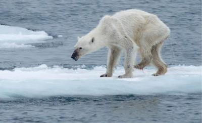 El problema es que usar animales exóticos o glaciares como «víctimas» de los efectos del cambio climático puede hacer pensar que se trata de una circunstancia alejada que no te va a afectar.