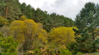 La superficie arbolada de España se eleva a 18,4 millones de hectáreas, lo que representa un incremento de un 33 % respecto a los 13,4 millones de ha de 1990, principalmente como consecuencia de la repoblación de árboles y el abandono de tierras agrícolas.