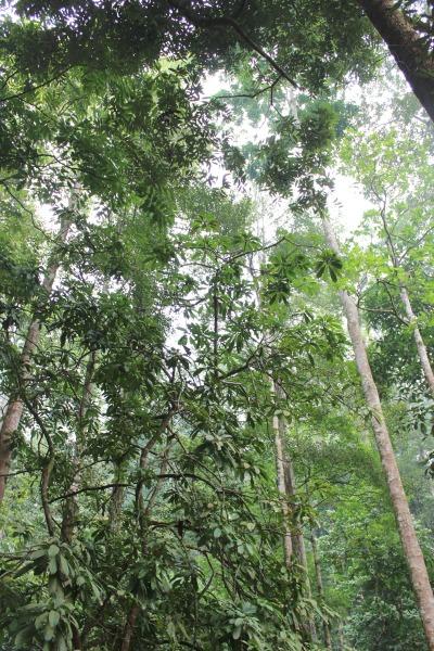 El documento se centra en las medidas de mitigación y adaptación al cambio climático basadas en los bosques, en la financiación forestal y en la realización de un balance global (Global Stocktage) en el marco del Acuerdo de París.