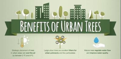 La silvicultura urbana y periurbana (SUP o UPF —Urban and Peri-urban Forestry—) es la práctica de la gestión de los bosques, de los grupos de árboles y de los árboles individuales dentro y alrededor de las áreas urbanas con el fin de maximizar su valor económico, los medios de vida, sociales, culturales, ambientales y de la biodiversidad.