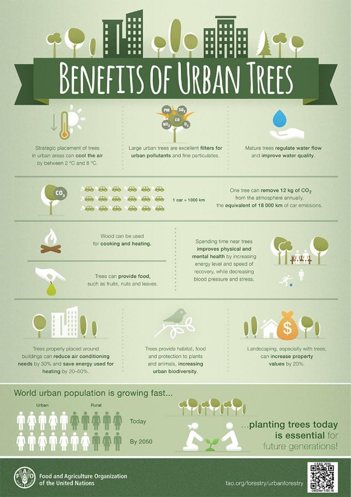 -Un árbol puede eliminar 12 kg de CO2 de la atmósfera anualmente, el equivalente a las emisiones provocadas por 18 000 km recorridos por los automóviles.