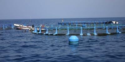 El objetivo de estas ayudas consiste en reforzar la competitividad del sector de la acuicultura, a través del desarrollo de conocimientos técnicos, científicos u organizativos en las explotaciones acuícolas.