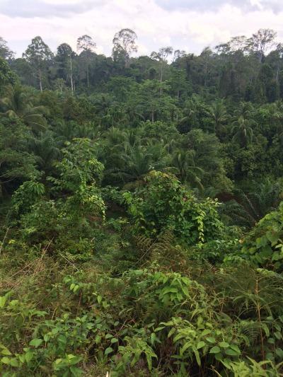 El Desafío de Bonn es una acción mundial encaminada a restaurar 150 millones de hectáreas de tierras degradadas y deforestadas de aquí a 2020, y 350 millones de hectáreas para 2030.
