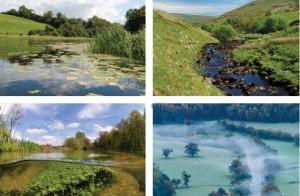Los ríos saludables forman importantes corredores ecológicos a través de nuestros paisajes y se encuentran entre los hábitats más ricos para la vida silvestre.