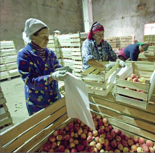 El informe explora los desafíos vinculados a la transformación estructural y rural en los países en desarrollo. Así, destaca que «las zonas rurales deben transformarse rápidamente para ser incluidas de forma sostenible en las economías en crecimiento y contribuir a la prosperidad general».