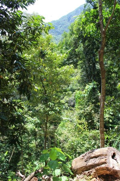 Tras analizar 777 126 parcelas de muestreo con 30 millones de árboles de 8737 especies en 44 países del planeta, los autores de esta investigación, que cuenta con participación de científicos españoles, estiman que el valor económico de la biodiversidad en el mantenimiento de la productividad comercial de los bosques asciende a entre 166 000 y 490 000 millones de dólares por año.