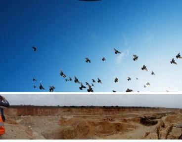 El documento incluye una recopilación de buenas prácticas empresariales nacionales e internacionales, con ejemplos de, entre otros, Acciona, Borges, EDP, Endesa, Gas Natural Fenosa, Iberdrola, LafargeHolcim, Nestlé, Repsol y Red Eléctrica de España, y una metodología de primeros pasos de una empresa en la gestión de la biodiversidad.
