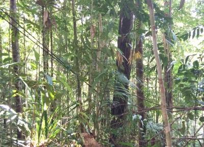 Durante octubre y principios de noviembre han tenido lugar varios encuentros internacionales relacionados con la gestión de los bosques, en los que se han examinado aspectos críticos para la industria forestal y el uso sostenible de las masas forestales europeas, además de abordar el vínculo entre la ciencia, la conservación y la silvicultura en Asia y Oceanía.