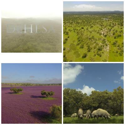 Rodado en Extremadura, Andalucía, Castilla-La Mancha y el Alentejo portugués, Dehesa es un documental dedicado en exclusiva a un ecosistema excepcional en Europa por la enorme riqueza de su biodiversidad: la dehesa.