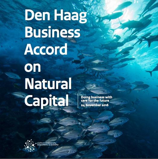 Como principales usuarios de los recursos naturales, las empresas dependen e influyen en el capital natural y en su biodiversidad y, por tanto, juegan un papel clave a la hora de contribuir a que su utilización se haga dentro de la fronteras planetarias.