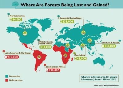 La infografía muestra que Europa y Asia Central son las regiones del mundo en las que se ha producido un mayor impulso de la reforestación en el periodo mencionado, durante el que se han ganado 235 000 km2 de bosques.