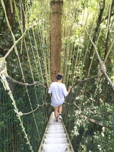 Los bosques primitivos son vistos por los europeos como la imagen de la naturaleza más natural de todas las mostradas en la encuesta: un 82 % de las respuestas los califican como «naturales» o «muy naturales».