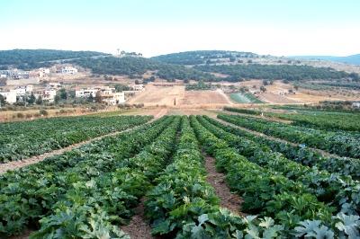 la actividad agraria es una emisora significativa de GEI. Los sectores agroalimentarios también son capaces de actuar sobre el cambio climático mediante la reducción de sus emisiones y adaptándose al cambio climático.
