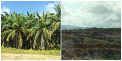 Center for International Forestry Research (Cifor —Centro para la Investigación Internacional de la Silvicultura) se basa en una investigación pantropical de 22 iniciativas subnacionales REDD + en cinco países para explorar los patrones de los costes de implementación, incluyendo qué tipos de organizaciones están involucradas y cuáles están compartiendo los costes de implementar REDD +.