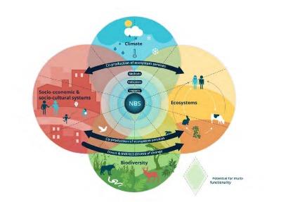 El documento presenta, entre otros ejemplos, el caso de Barcelona, ciudad que ha dado un impulso importante a la mejora del entorno urbano mediante la implantación de medidas para la mejora de la calidad del aire y la resiliencia al cambio climático. En concreto, la Ciudad Condal adoptó soluciones basadas en la naturaleza para hacer frente a estos desafíos, entre las que se cuentan un programa de plantación de árboles en las calles, la asignación de espacios para huertos urbanos o para la conversión de espacios verdes.