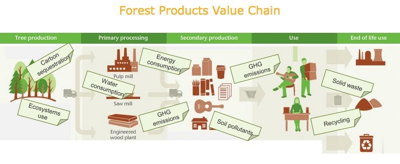 Una comprensión más clara de las complejas relaciones de impacto y dependencia que existen a lo largo de la cadena de valor de los productos forestales contribuirá a una mejor toma de decisiones y fomentará una divulgación más precisa.