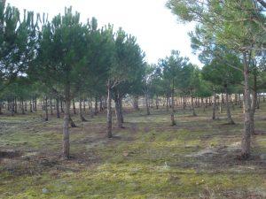 La restauración forestal y del paisaje (Forest and Landscape Restauration —FLR—), el logro de la Neutralidad en la Degradación de la Tierra (Land Degradation Neutrality —LDN—) y otros esfuerzos de conservación de la biodiversidad en la región del Mediterráneo han sido algunos de los temas protagonistas de este evento internacional que ha contado con la participación de representantes de más de 20 países mediterráneos.