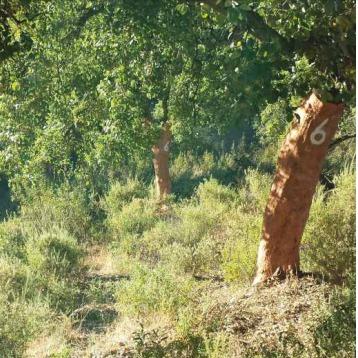 El documento, cuya publicación ha contado con el apoyo de la Fundación Biodiversidad, analiza el estado de la naturaleza en España y recoge ejemplos de actuaciones directas de recuperación de especies y rehabilitación de territorios en peligro o con amenazas para su recuperación y rehabilitación, entre otros.