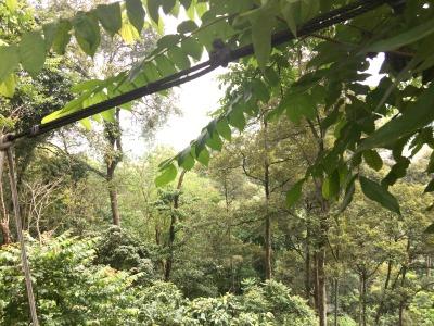 El Plan Estratégico de las Naciones Unidas para los Bosques 2017-2030 aporta un marco global para el desarrollo de acciones a todos los niveles relacionadas con la gestión forestal sostenible, aplicable a todo tipo de bosques y de árboles situados fuera de los bosques, con el fin de detener la deforestación y la degradación forestal a escala global.