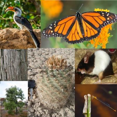 Los responsables de gestionar las áreas protegidas tienden a luchar por lograr una biodiversidad rica, lo que generalmente significa conservar tantas especies como sea posible en un espacio limitado. Pero el enfoque propuesto en esta investigación plantea que dichos administradores podrían estar interesados en incluir especies que representen también diversidad evolutiva y funcional.