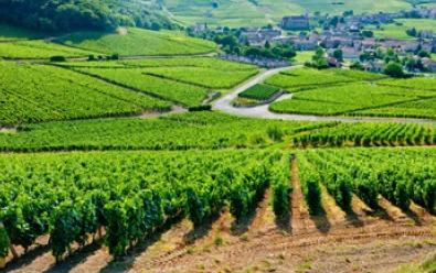 La Unión Europea ha publicado una guía para ampliar el conocimiento sobre la Política Agraria Común (PAC). Se trata de Una asociación entre Europa y los agricultores, en la que se detallan las razones de por qué es necesaria la PAC, cómo funciona, cuál es el papel de la UE y se ofrece un perfil sobre la agricultura europea en el horizonte 2020 y los desafíos que debe abordar.