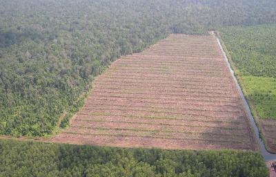 Iniciativas de cero deforestación y su impacto en las cadenas de suministro de materias primas es una publicación de la FAO que recoge iniciativas de deforestación cero y las implicaciones que este compromiso global tiene para las industrias forestales y sus cadenas de suministro de materias primas.