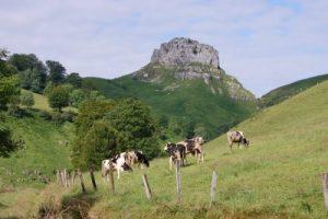 Definiciones de agroecología, cultivos intercalados, pasturas y pasturas naturales.
