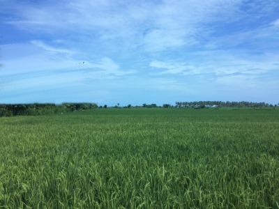 Medidas agroambientales como herramienta política muy eficaz para integrar las preocupaciones medioambientales en políticas agrícolas y la agricultura de Europa.