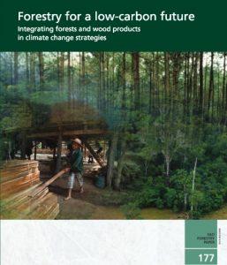 Los bosques y los productos forestales tienen un papel clave que desempeñar en la mitigación y la adaptación al cambio climático.