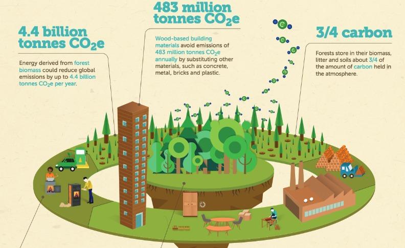 Los árboles aumentan la absorción del carbono de la atmósfera al tiempo que una gestión forestal y de los productos forestales sostenible mejora los medios de subsistencia y reduce la huella de carbono