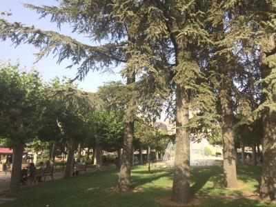 Citree es una base de datos que permite a sus usuarios considerar simultáneamente las características del sitio y su distribución natural, la apariencia de los árboles, los servicios de los ecosistemas, las actividades de gestión y los riesgos e interferencias causados por las plantas leñosas urbanas.