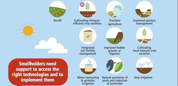 Respondiendo al cambio climático: prácticas agrícolas sostenibles.