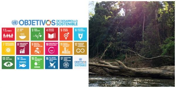 Los Objetivos del Desarrollo Sostenible y REDD +: Evaluando las interacciones institucionales y la búsqueda de sinergias.