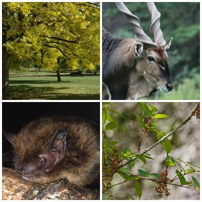 De las 87 967 especies de plantas y animales evaluadas por los especialistas de la UICN, 25 062 se encuentran en «peligro de extinción».