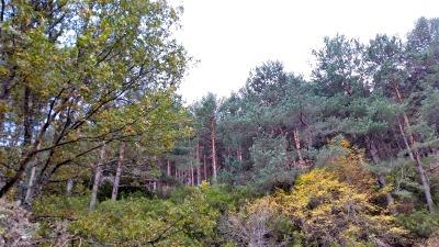 En la actualidad, Natura 2000 cubre casi un 18 % del territorio de la UE, donde los bosques juegan un papel fundamental para la red y viceversa.