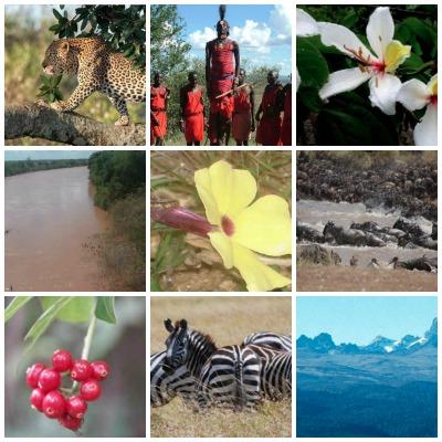 El atlas del capital natural de Kenia documenta las amenazas que sufren especies, hábitats y recursos naturales y los pasos en materia de conservación que el país africano está llevando a cabo para cubrir las brechas existentes.