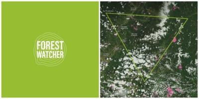 Para facilitar la labor de campo a los responsables de velar por la conservación de las masas forestales, independientemente de si disponen o no de cobertura móvil, los técnicos de Global Forest Watch (GFW) han lanzado Forest Watcher.