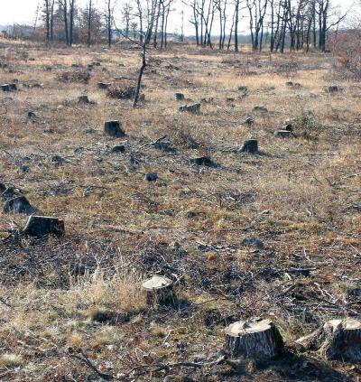 El cambio de hábitat, incluida la pérdida, fragmentación y degradación de los hábitats naturales y seminaturales debido a cambios en el uso del suelo, es una de las principales amenazas de la biodiversidad.