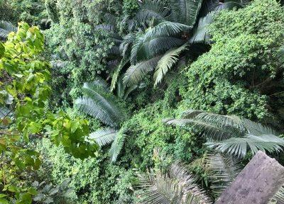 Una investigación llevada a cabo por un equipo multidisciplinar e internacional de científicos publicada Nature confirma que los países que gastan más dinero en conservación tienen menos biodiversidad amenazada de extinción.