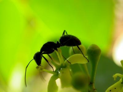 Nuestro incompleto conocimiento taxonómico impide los intentos de proteger la biodiversidad, por lo que es crítico contar con un mayor número de taxónomos que contribuyan a indexar especies hasta ahora desconocidas y sus interacciones. Esto es necesario para orientar la priorización de la conservación.