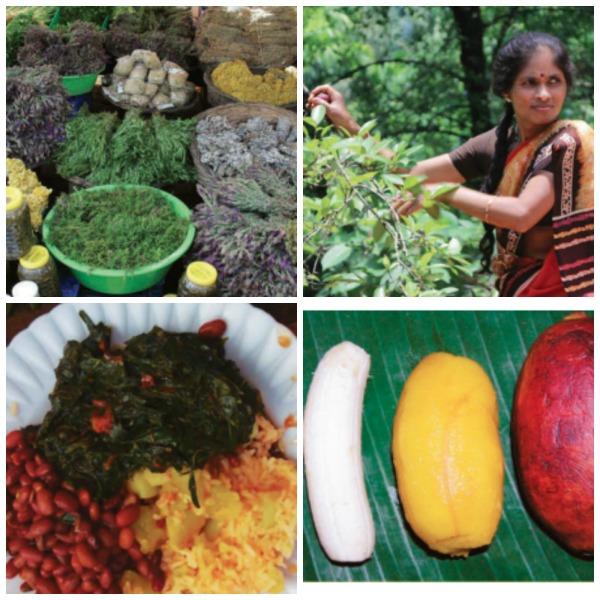 La biodiversidad agrícola o agrobiodiversidad es la base del desarrollo agrícola sostenible y es un recurso natural esencial para garantizar la seguridad alimentaria y nutricional actual y futura.