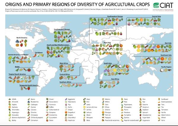 Una investigación llevada a cabo por expertos del International Center for Tropical Agriculture (CIAT) ha derivado en la elaboración de varios mapas interactivos que permiten explorar la proveniencia geográfica de nuestros alimentos, así como su relación con nuestra dieta.