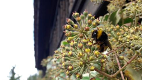 Las abejas y otros polinizadores hacen posible la reproducción de muchas plantas, suministran miel y actúan como centinelas frente a las amenazas ambientales emergentes al informar de la salud de los ecosistemas locales.
