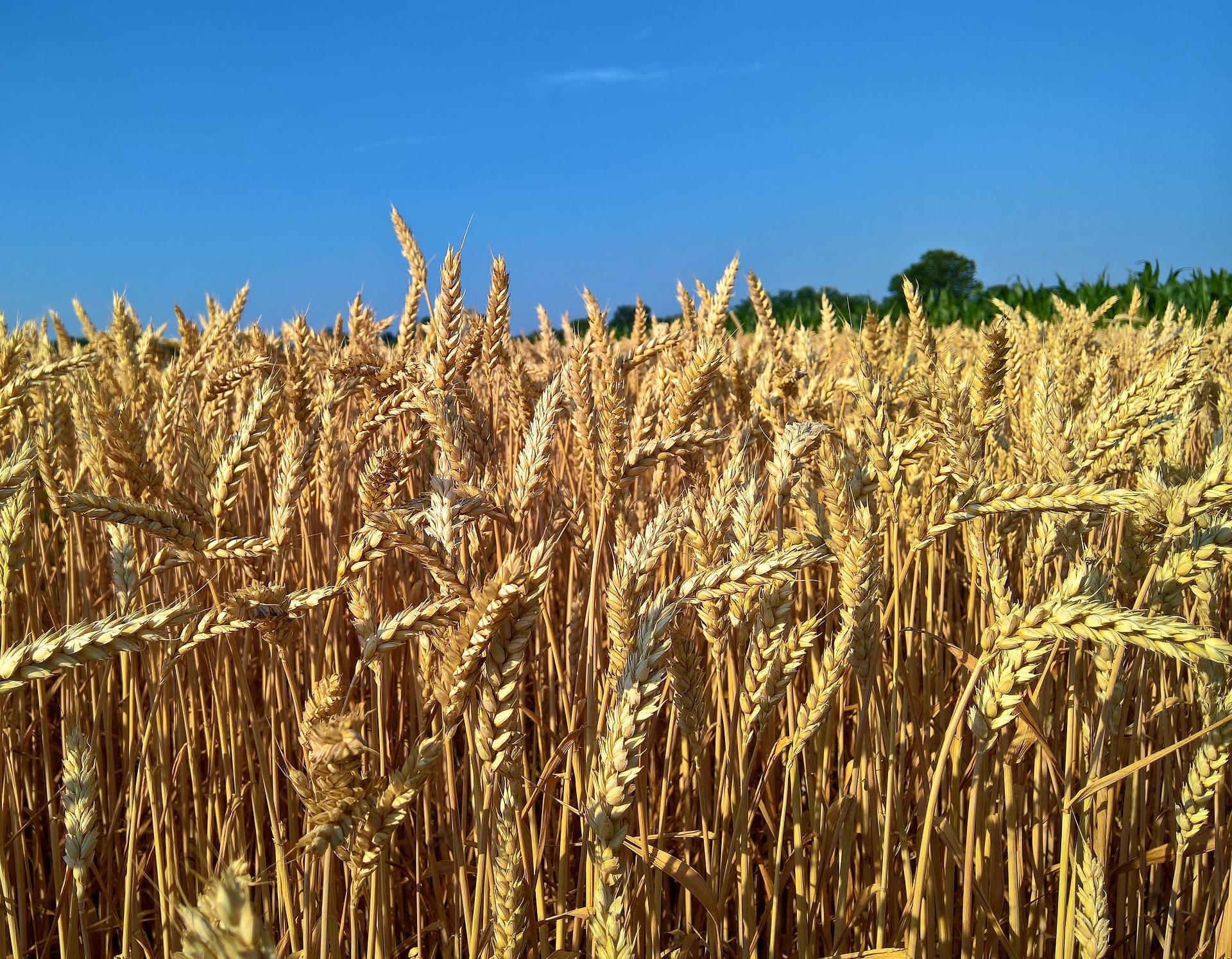 Bajo una nueva directiva de la UE, los combustibles basados en bioetanol —que se fabrican mediante fermentación de biomasa— deben ahorrar un 70 % de emisiones de GEI en comparación con los homólogos fósiles a partir de 2021.