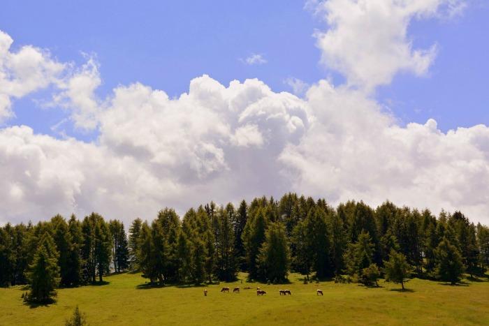 La Xunta de Galicia ha hecho pública la orden que establece las bases reguladoras de las ayudas dirigidas a la elaboración de instrumentos de ordenación o gestión forestal —que cuentan con un presupuesto de 4 000 000 de euros cuyo plazo de solicitud expira el 26 de marzo—, mientras que el Ministerio de Agricultura y Pesca, Medio Ambiente y Alimentación ha comunicado el inicio de la campaña de solicitud de las ayudas directas a la PAC, cuya partida asciende a 4940 M€. El último día para gestionar la solicitud de estas últimas es el 30 de abril de este año.