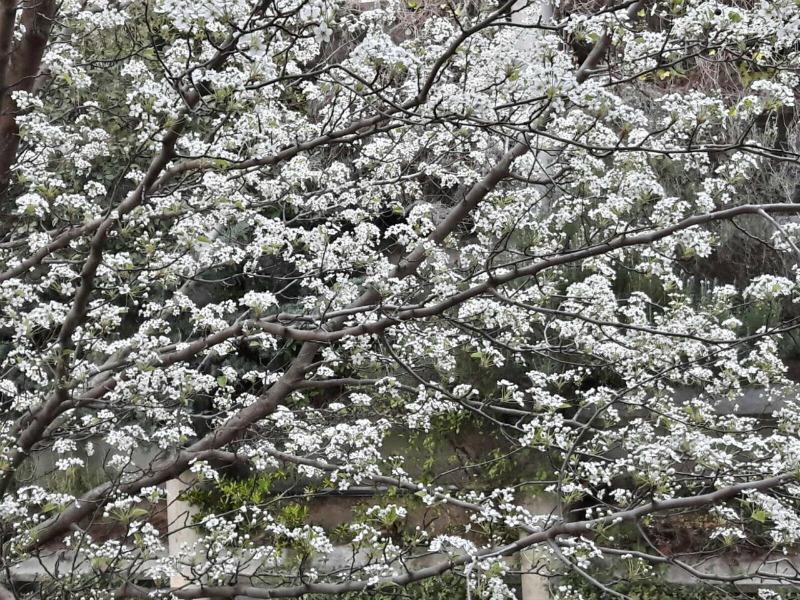 Las plantas necesitan florecer para reproducirse. Y para florecer, necesitan un estímulo, función que generalmente realiza un largo invierno frío. Pero si los inviernos se vuelven más suaves, las plantas pueden no enfriarse lo suficientemente como para notar la diferencia cuando comiencen las temperaturas más cálidas de la primavera. Esto influye en funciones críticas de los ecosistemas naturales como la polinización, determinante para garantizar la producción de numerosos alimentos.